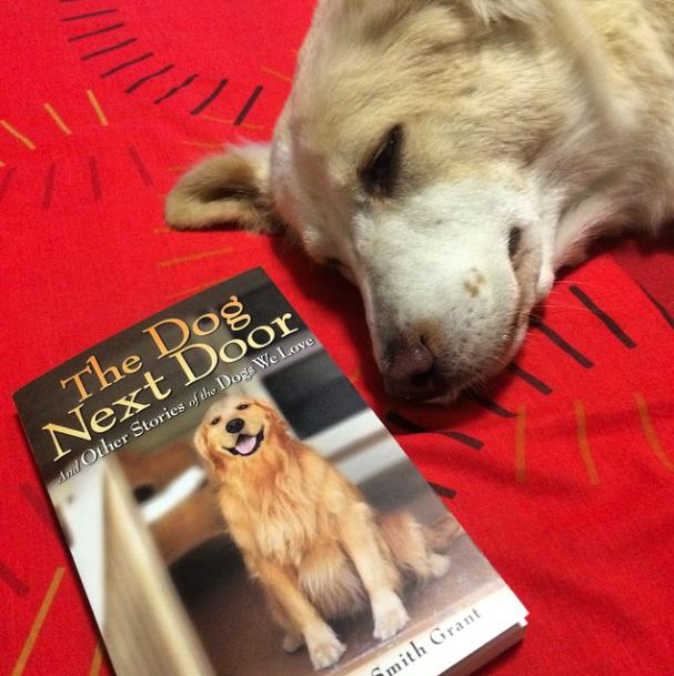 Book of the Week: The Dog Next Door
